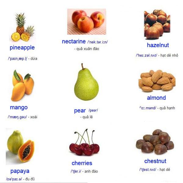 Học từ vựng Tiếng Anh qua hình ảnh khá thú vị