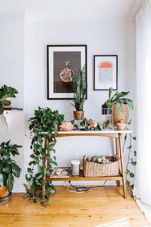 Trang trí nhà cửa bằng cây dây leo mang lại nhiều lợi ích