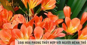 Đâu là những loại hoa phong thủy hợp với người mệnh Thổ?